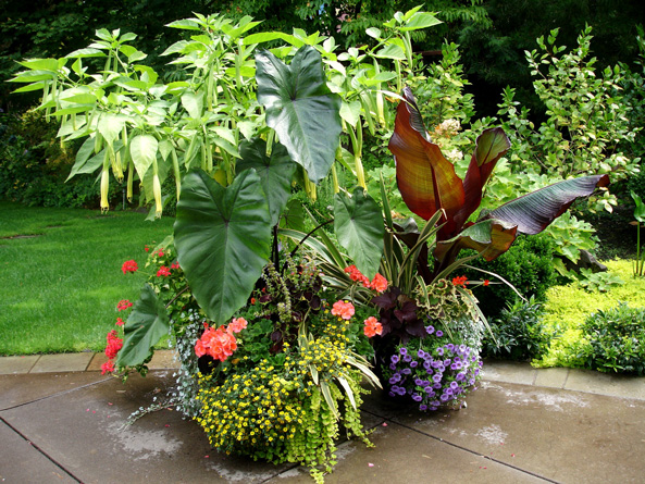Services Ash Grove Gardens